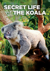 Secret Life of the Koala